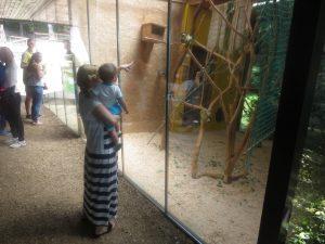Midva med opzaovanjem malih opic. :)